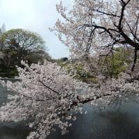 2015年4月新宿御苑 (5)